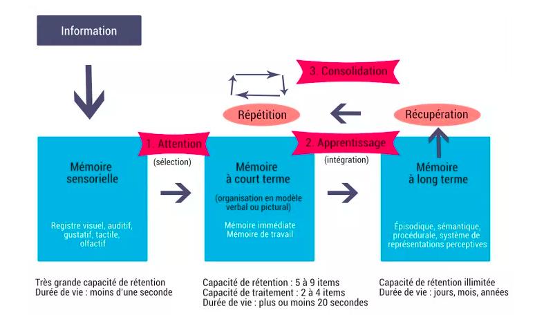 schéma sur le processus de mémorisation