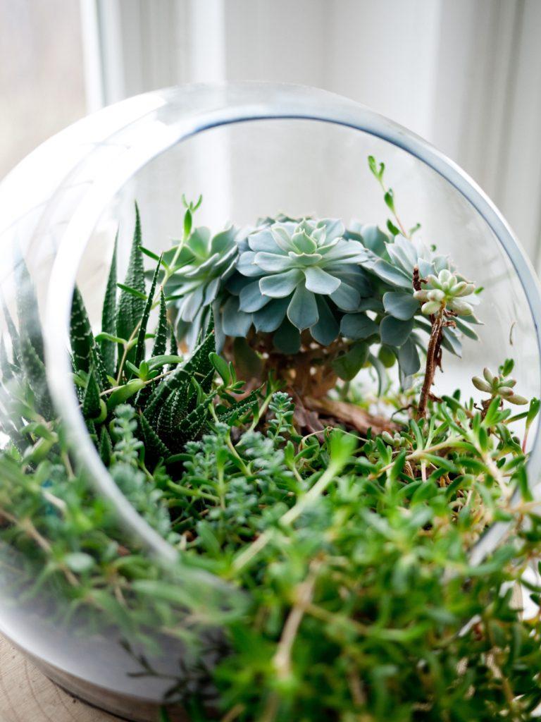 terrarium composé d'un bocal avec des plantes grasses
